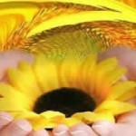 La hooponopono meditación – Descripción y ejercicios